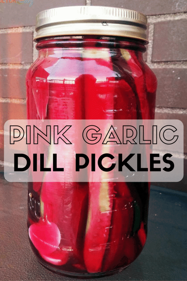 Pink Garlic Dill Pickles