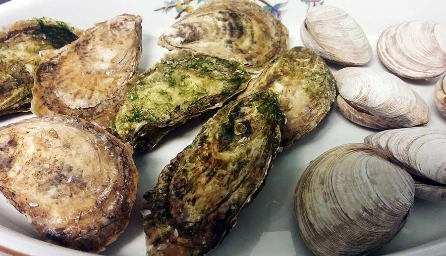 Sauteed Clams Oysters