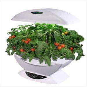 Salsa+Garden+Seed+Kit