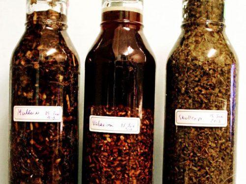 steeping herbal tinctures