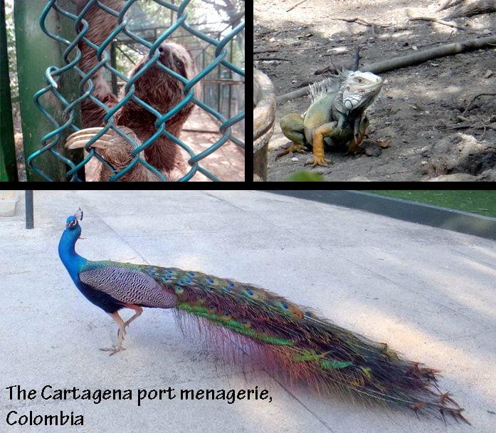 3 Cartagena 2