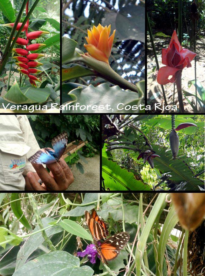 5 Costa Rica 2