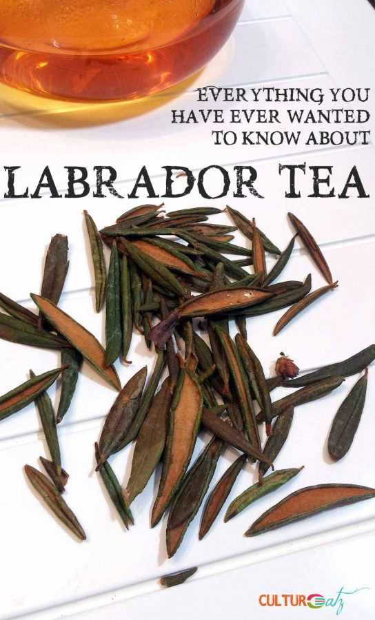 Labrador Tea with leaves
