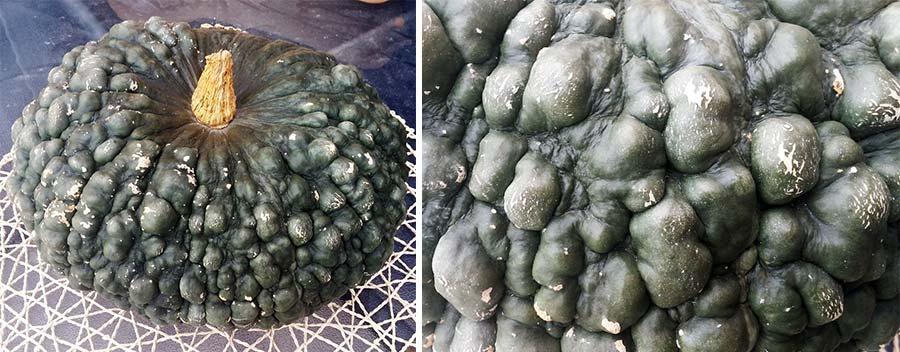Marina Di Chioggia stuffed squash