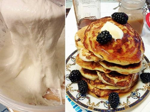 sourdough starter and pancakes